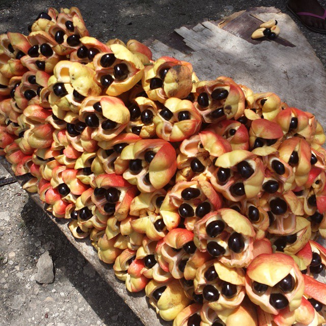 jennborgh_weddings Roadside ackee for sale!