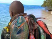 Why We Need to Stop Eating Parrot Fish